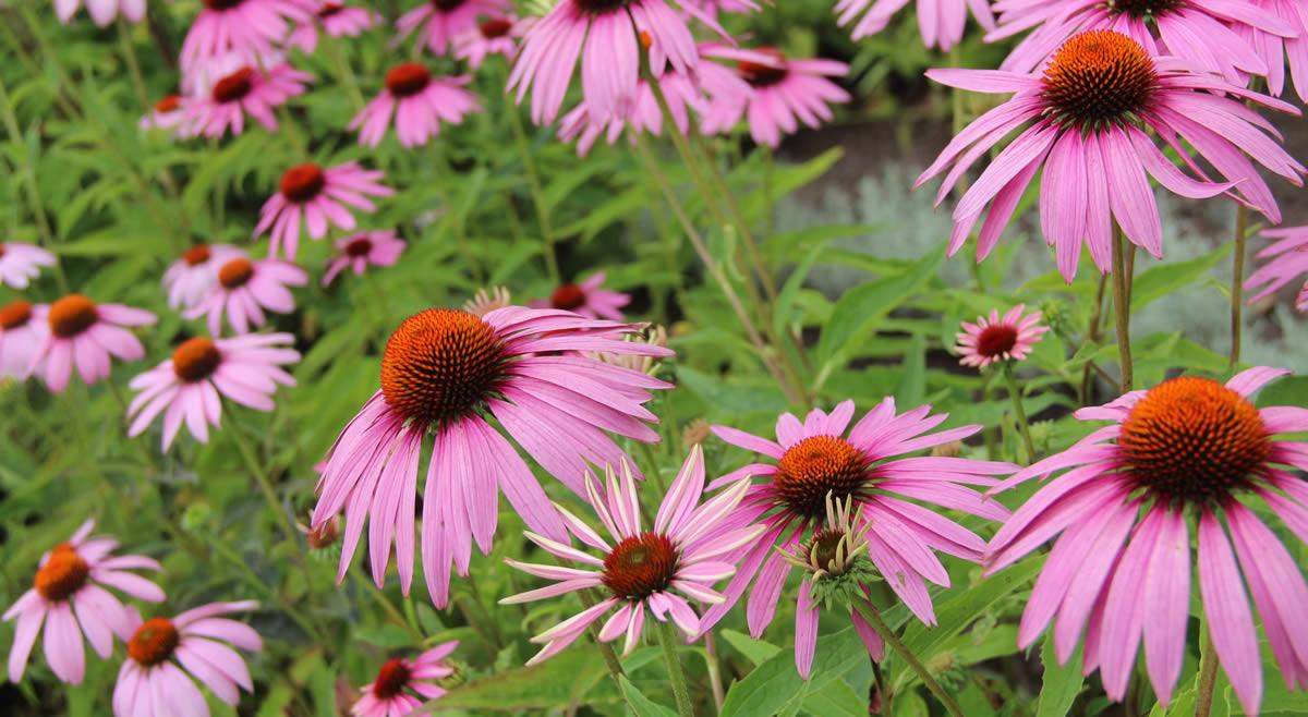 Flores en el Ökologisch-Botanischer Garten de Bayreuth. © Bayreuth.es